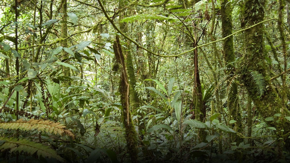 A new NASA study suggests that tropical forests, like this one in Malaysia, absorb more atmospheric carbon dioxide than is absorbed by forests in Alaska, Canada and Siberia. (Image credit: Wikimedia Commons)